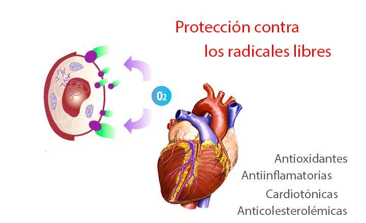 Propiedades y beneficios de las antocianinas