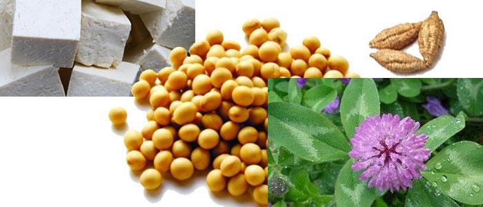 alimentos ricos en daidzeina y flavonoides