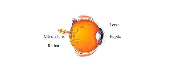 Luteía y zeaxantina para degeneración macular