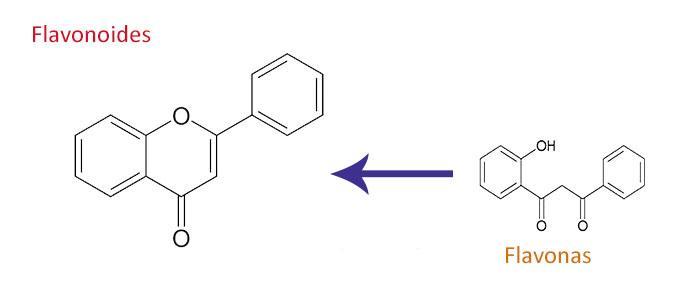 relación entre la flavona naringenina y los flavonoides