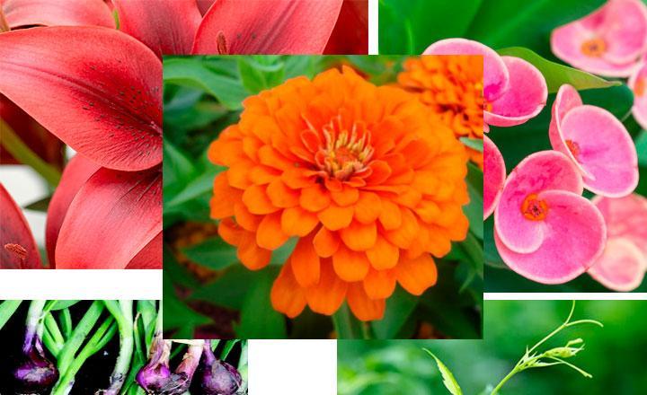 Flavonoides en plantas y vegetales