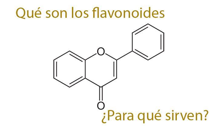 Que son los flavonoides y para que sirven