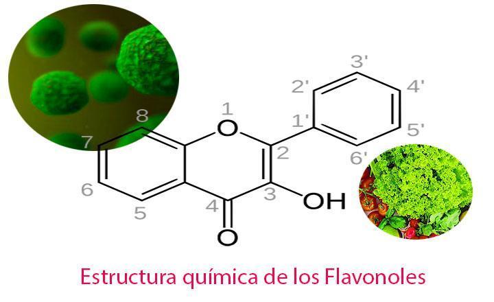 Tipos de Flavonoles, qué son y cuáles son sus Propiedades