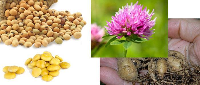 Alimentos ricos en genisteína