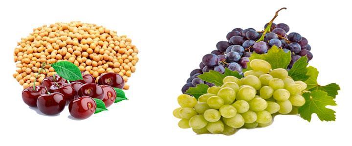 Alimentos con isoflavonas antioxidantes