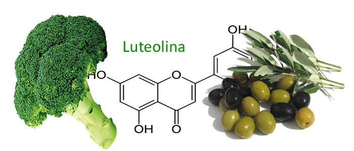 Luteolina, propiedades, beneficios y alimentos en donde está