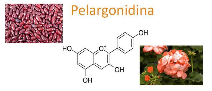 Pelargonidina, Propiedades, Beneficios, Glucósidos y Alimentos