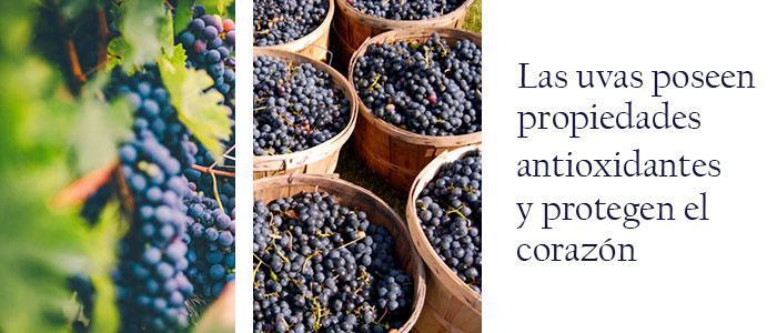 polifenoles naturales de uva y flavonoides en su composición