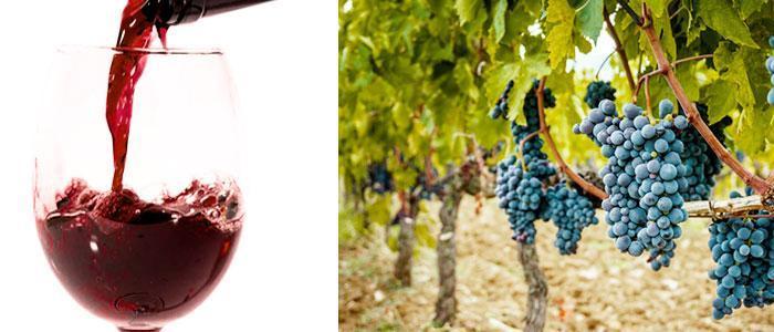 Polifenoles en el vino y la uva