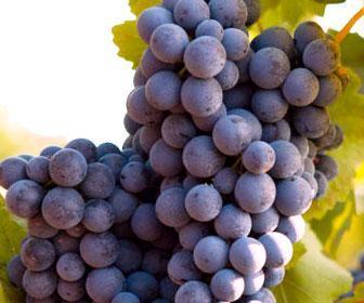 Propiedades y beneficios del resveratrol en el vino y las uvas