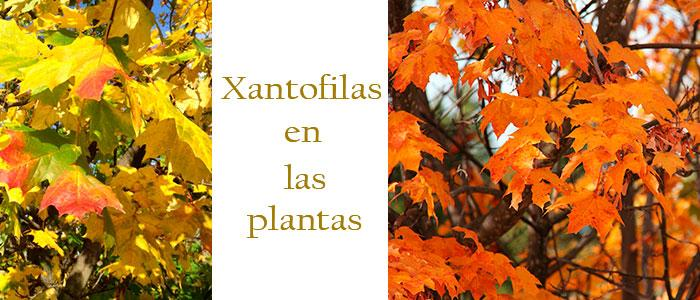 Color de las xantofilas y pigmentos naturales